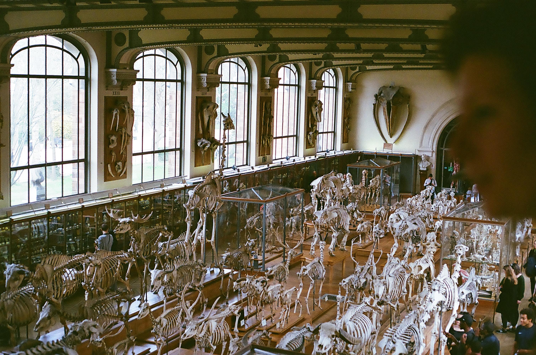 mariebabeau-graphiste-photographe-freelance-strasbourg-poitiers-france-museum histoire naturelle-paris-01